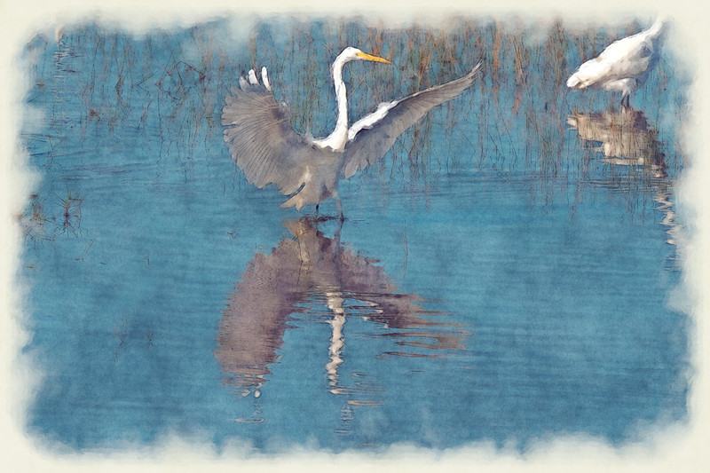 White egret wings spread in water - paintography