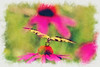 Purple Coneflower with Eastern Tiger Swallowtail paintography
