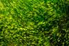 Grass swaying in wind prairies of South Dakota