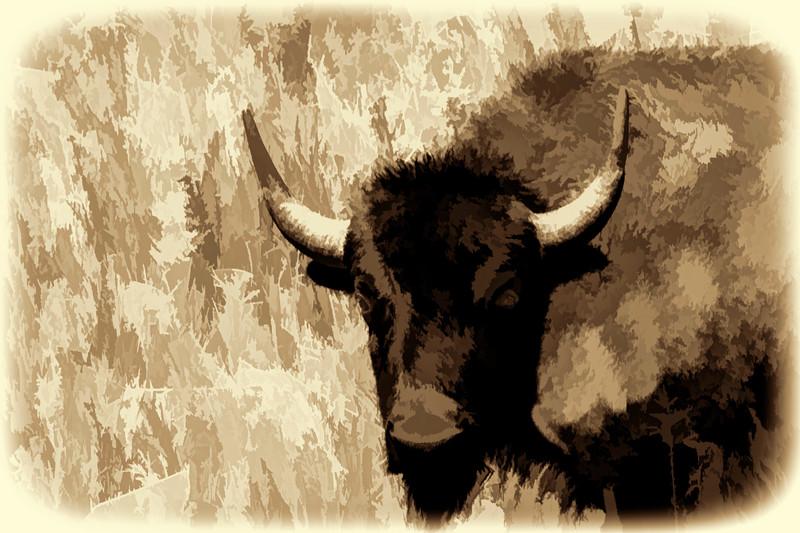Buffalo portrait - paintography