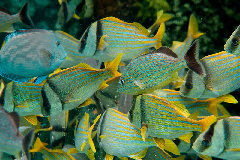 School of fish................................................To purchase digital file or purchase print e mail - DFriend150@gmail.com
