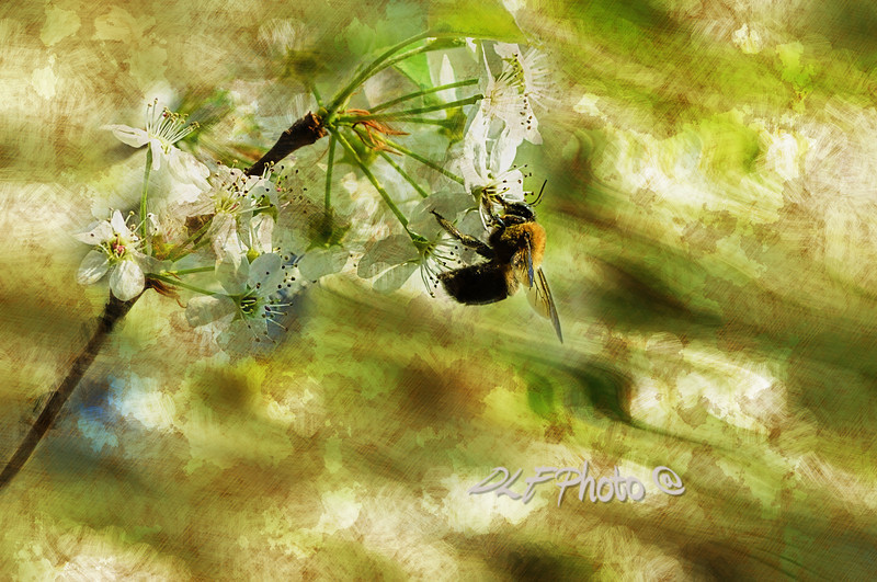 "Bumble bee eating sweet nectar<br /> <br /> to purchase - <a href=""http://dan-friend.artistwebsites.com/featured/bumble-bee-eating-sweet-nectar-dan-friend.html"">http://dan-friend.artistwebsites.com/featured/bumble-bee-eating-sweet-nectar-dan-friend.html</a>           .................................................................pixel paintography"