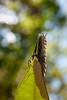 Moth looking at you