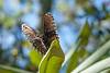 Moth on edge of leaf