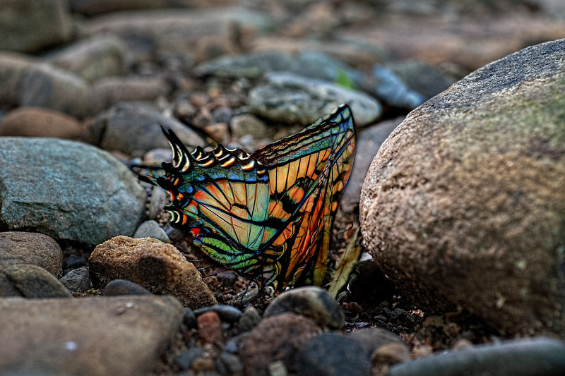 Colorful butterfly  paintography