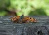 Moth on post