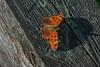 Beautiful moth with shadow