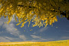 Leaves taking their fall trip