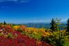 Blazing color of Roaring Plains