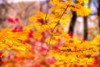 Fall bursting with color