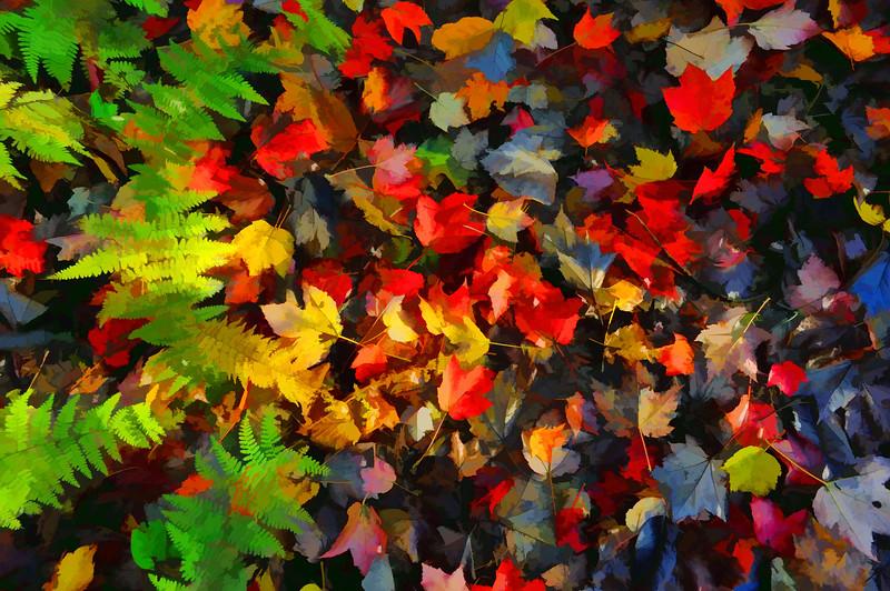 Falls color palette