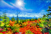 The brillant colors of Roaring Plains in Dolly Sods