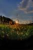 Sunset scene in grass