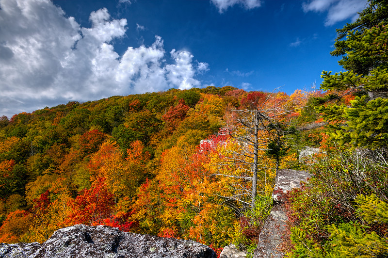 Hillside of color