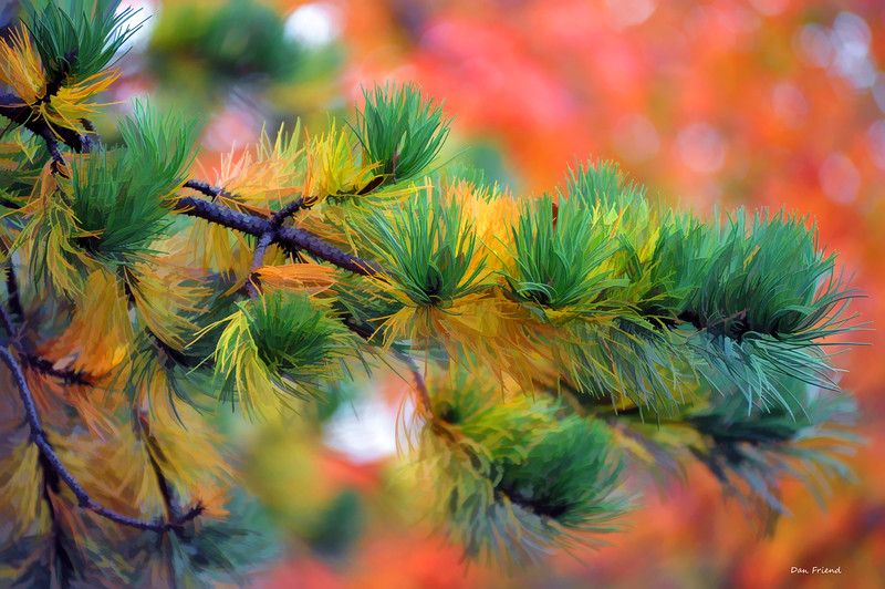Pine branch Dolly Sods in fall