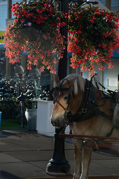 Pretty flowers and horse