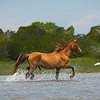 Handsome stallion prancing through the water paintography