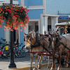 horse carriage waitng near flower pot