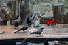 Birds enjoying the music