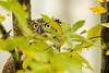 Eyes in the leaves