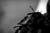 silhouette of hornet