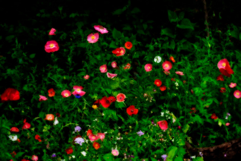 Red flowers in a garden   paintography