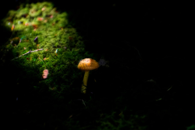 Magical lighting on mushroom in forest
