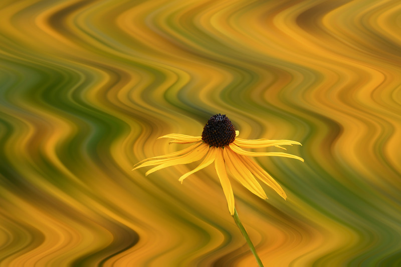 A flower in front of a twirl