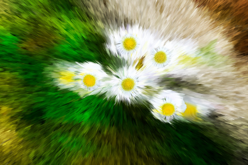 Exploding zoom image of whte flowers   paintography