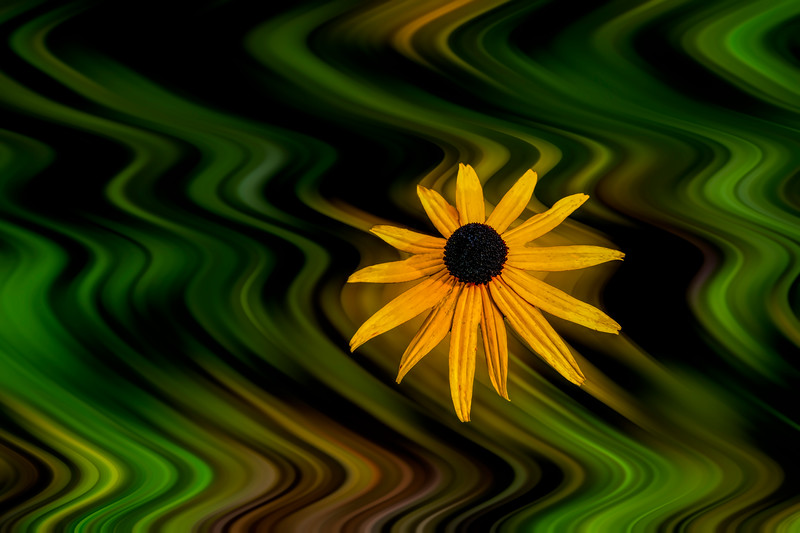 Yellow flower in focus in kaleidoscope background
