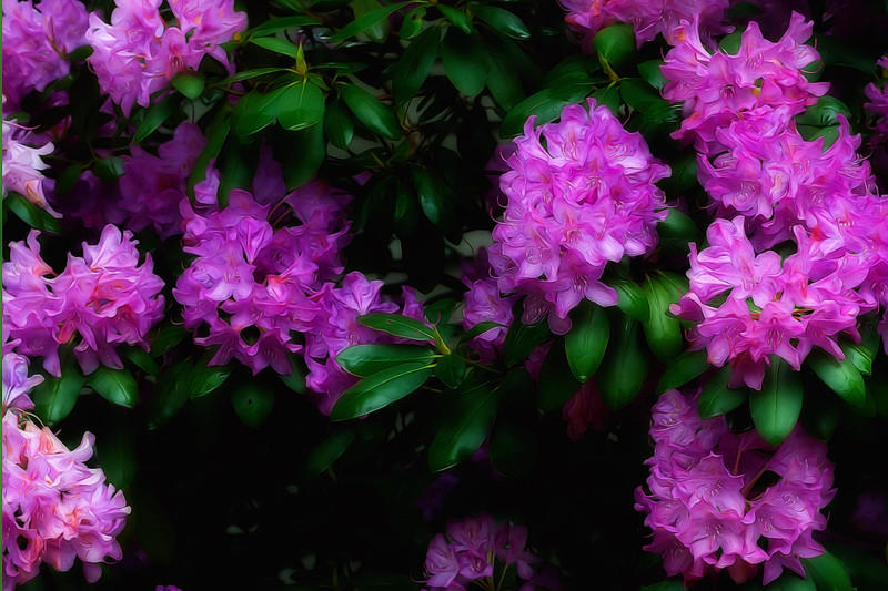 Rhododendron flower paintography