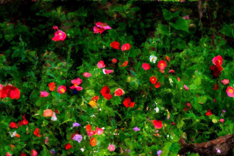 Red flowers in a garden artistic    paintography