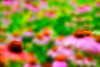 "Field of flowers<br /> <br /> to purchase  - <a href=""http://dan-friend.artistwebsites.com/featured/field-of-flowers-dan-friend.html"">http://dan-friend.artistwebsites.com/featured/field-of-flowers-dan-friend.html</a>           .................................................................pixel paintography"