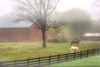 West Virginia farm scene