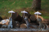 Three squirrels holding their umbrellas    paintography