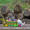 Grey squirrel in Easter basket eating