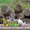 Squirrel eating in Easter basket