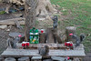 Chugging squirrels at beer pong