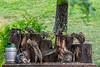 Backyard Squirrels enjoying some refreshment