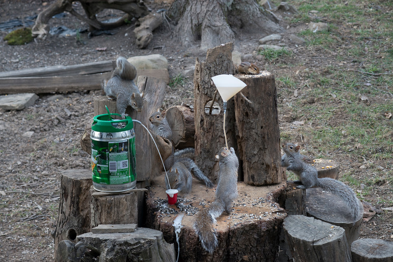 Grey tail tales - A beer bong is a device composed of a funnel attached to a tube used to facilitate the rapid consumption of beer