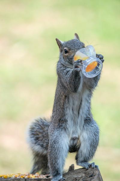 Taking a break from nut finding