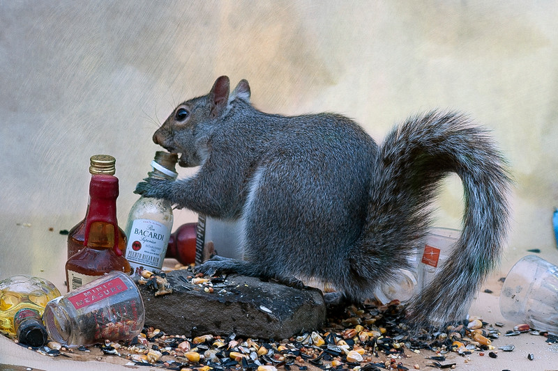 TGIF for this squirrel