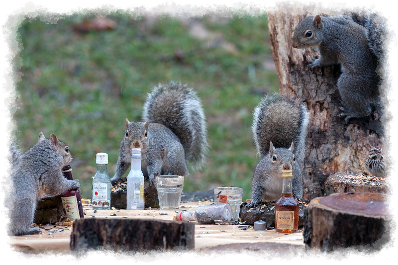 squirrels relaxing at the sunflower seed convention