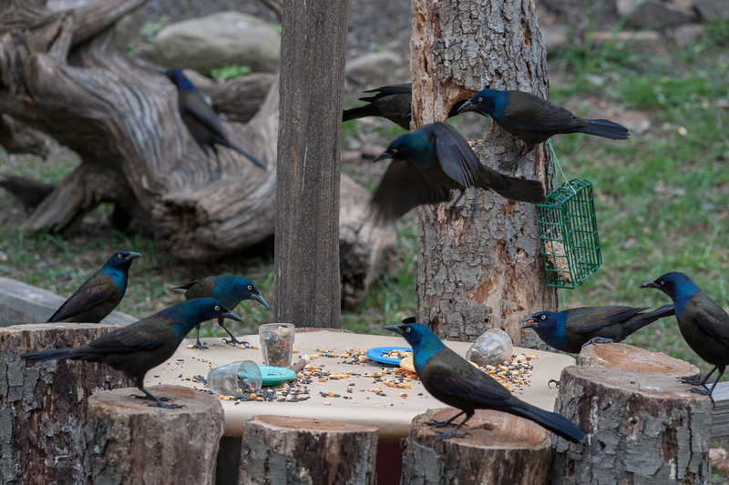 Lunch meeting on how to monopolize bird feeders
