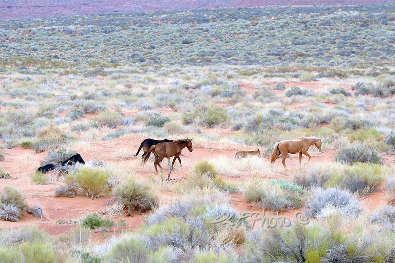 Wild horses..........................................Prints or digital files can be purchased by e mailing DFriend150@gmail.com