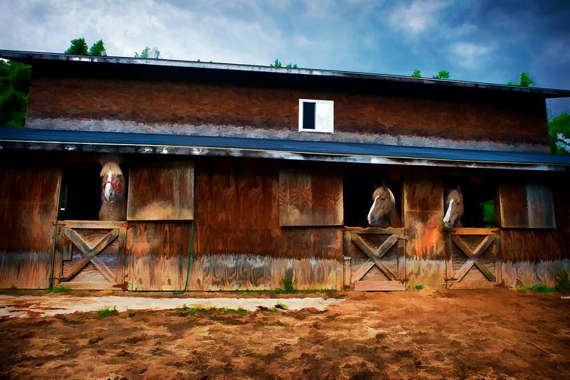 Three horses in a barn