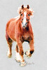 "Beautiful horse<br /> <br /> to purchase - <a href=""http://fineartamerica.com/featured/stallion-portrait-dan-friend.html"">http://fineartamerica.com/featured/stallion-portrait-dan-friend.html</a>           .................................................................pixel paintography"