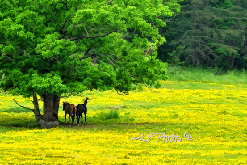 """Two horses under tree<br /> <br /> to purchase - <a href=""""http://dan-friend.artistwebsites.com/featured/two-horses-under-tree-dan-friend.html"""">http://dan-friend.artistwebsites.com/featured/two-horses-under-tree-dan-friend.html</a>           .................................................................pixel paintography"""