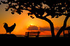 """Rooster enjoying a sunrise onthe beach....................to purchase - <a href=""""http://bit.ly/1g9D5YJ"""">http://bit.ly/1g9D5YJ</a>"""