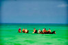 Grand Caymans - - Horses in the water<br /> To purchase digital file or purchase print e mail - DFriend150@gmail.com